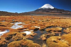 Лаука: национальный парк на севере Чили