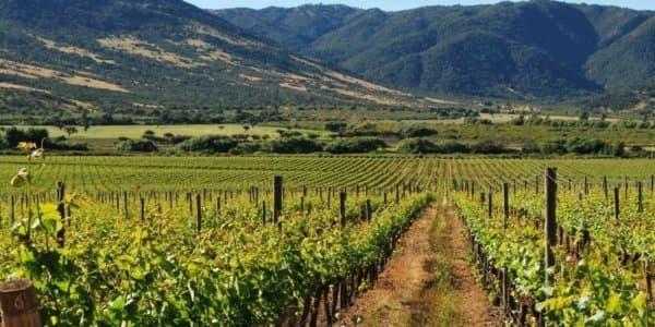 Винные долины Чили