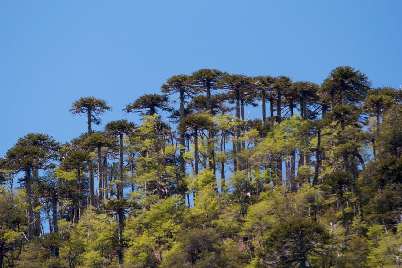 Нац. парк в Араукании, Чили